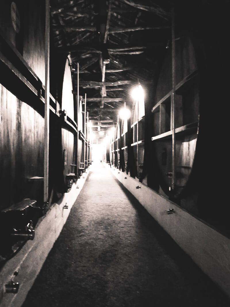 Taylor's Port Cellar Tours