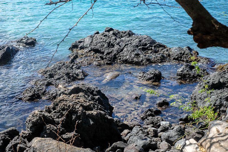 Snorkeling_in_Maui-10