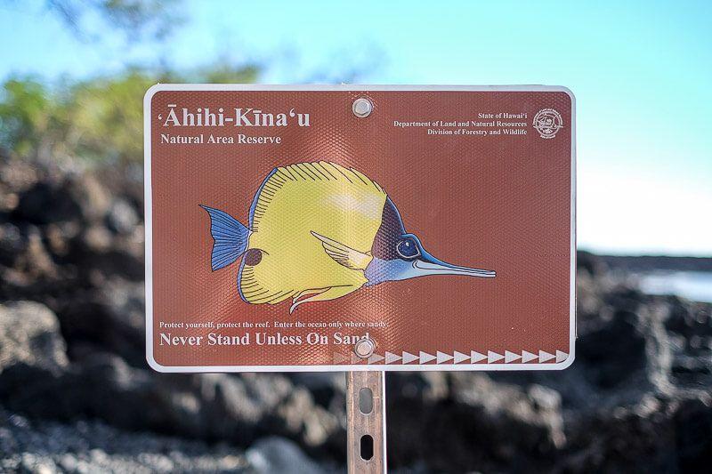 Snorkeling_in_Maui-18