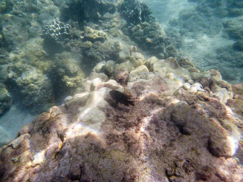 Snorkeling_in_Maui-5