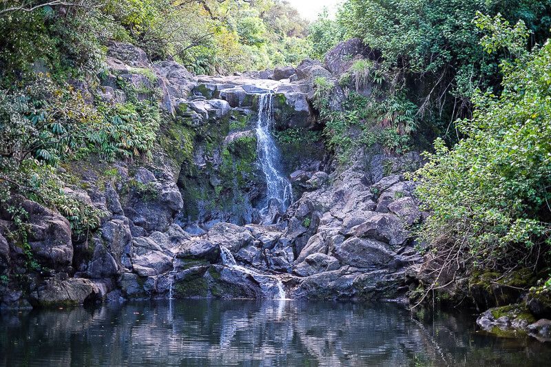 Road to Hana Guide: Bamboo Forest Trail