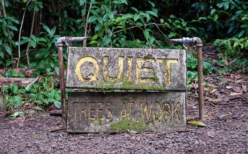 Road to Hana Guide: Waikamoi Nature Trail