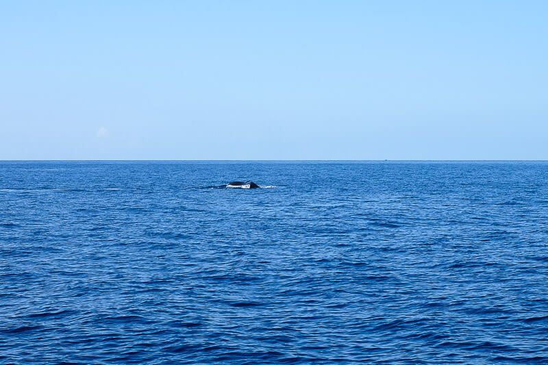 Trilogy Whale Watching