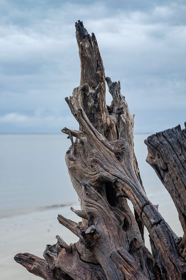 20 Photos of Georgia: Driftwood Beach, Jekyll