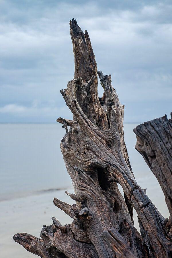 20 Photos of Georgia: Driftwood Beach, Jekyll