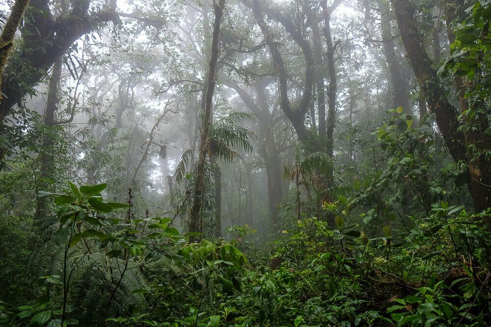Self-guided hike in the monteverde cloud forest