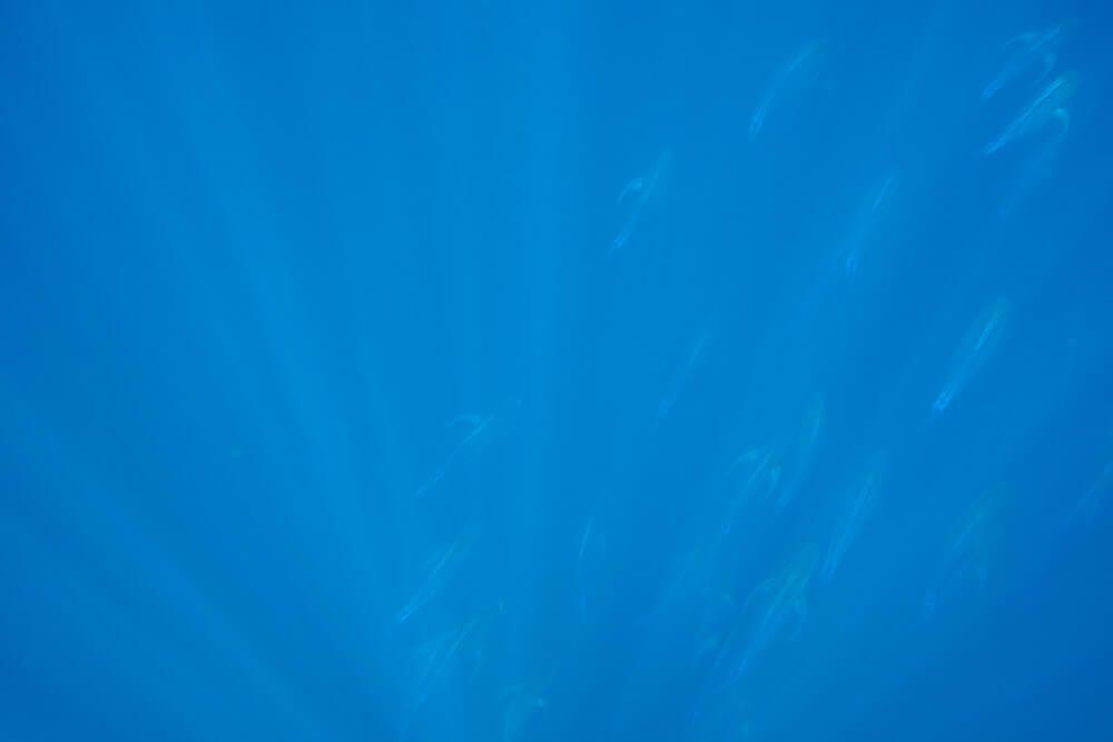 Snorkeling at Cano Island