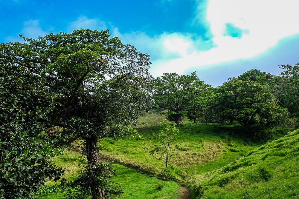 Monteverde Tours - Nasua Tours