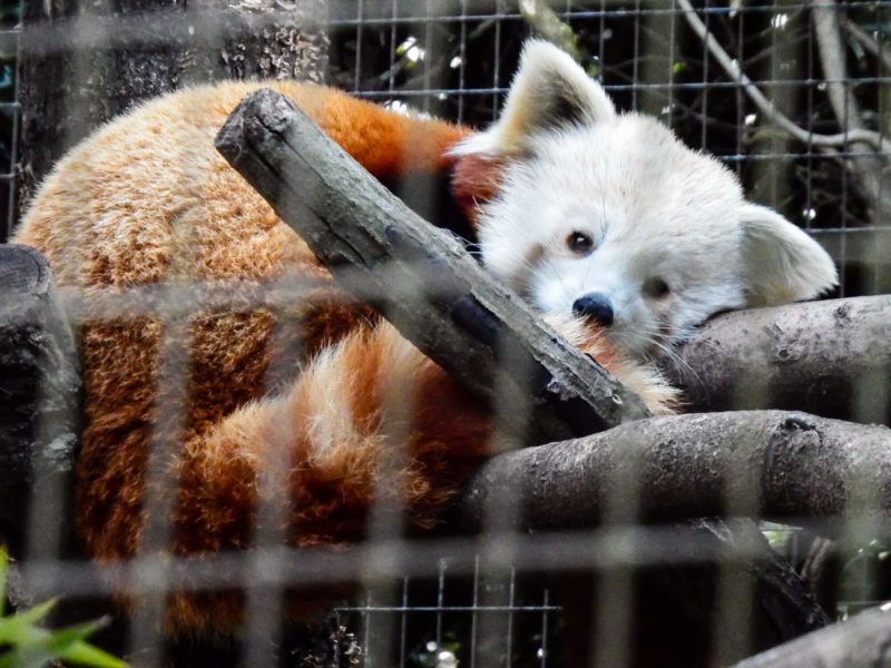 things to do in greenville in the fall: greenville zoo