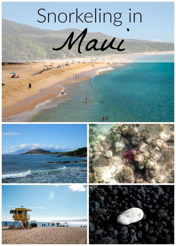 The snorkeling in Maui is unbelievable. But what if you want to see sea turtles? Here are 4 beaches in South Maui where you can snorkel with sea turtles.