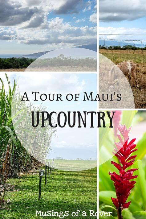 Did you know that Maui has a countryside where farms abound? I certainly didn't until I started making an itinerary. Find out why you need to add Ocean Vodka Distillery and Surfing Goat Dairy to your Maui Upcountry tour!