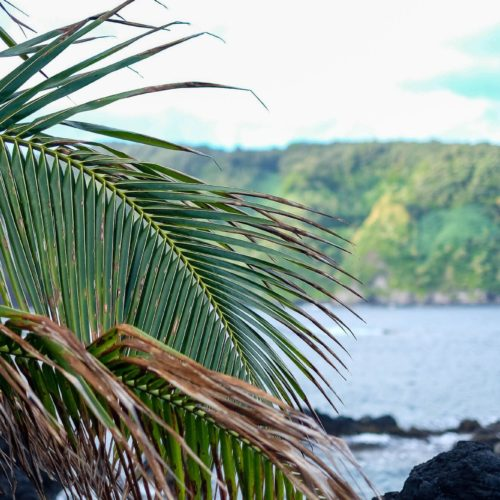 A Road to Hana Guide: The Stops You Need To See (And Those To Skip)