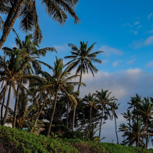 One Week in Paradise: A Maui Itinerary