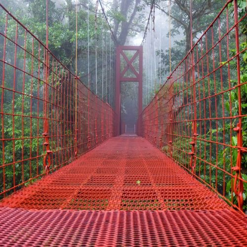 A Self-Guided Hike in the Monteverde Cloud Forest
