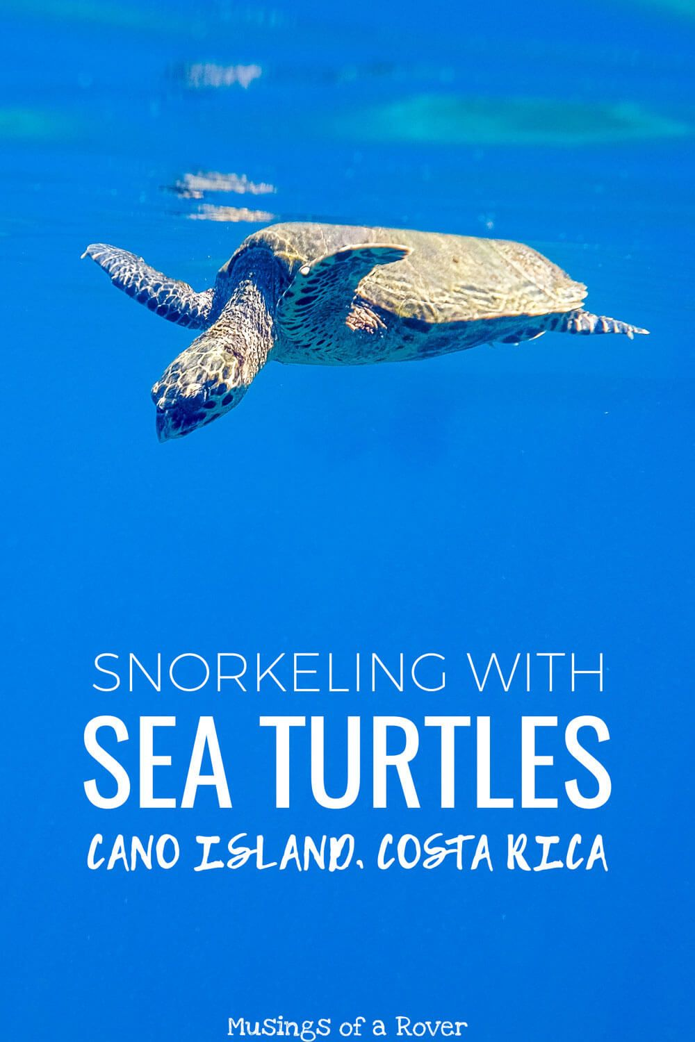 Visiting Costa Rica and want to see sea turtles? Cano Island is one of the best snorkeling spots in all of Costa Rica. You'll see sea turtles, stingrays, puffer fish, and more. Find out what this trip is like!