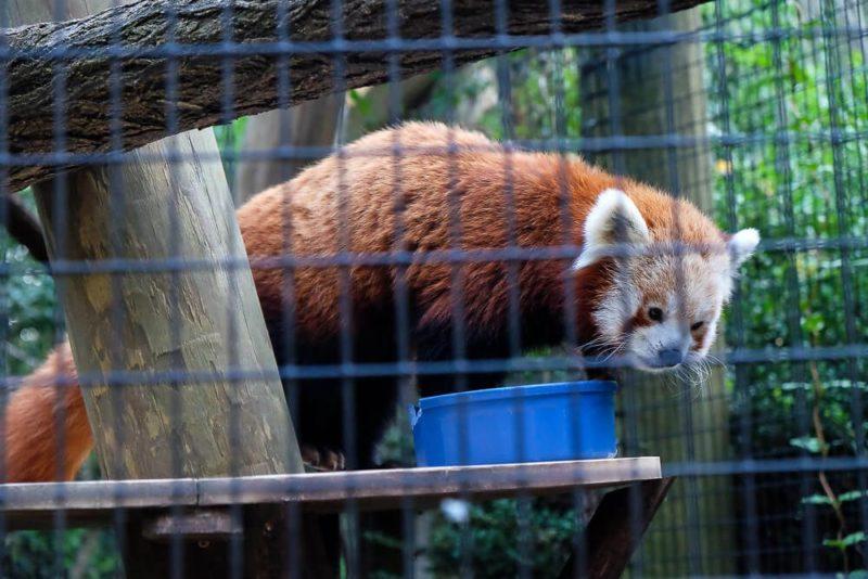Sippin Safari at the Greenville Zoo