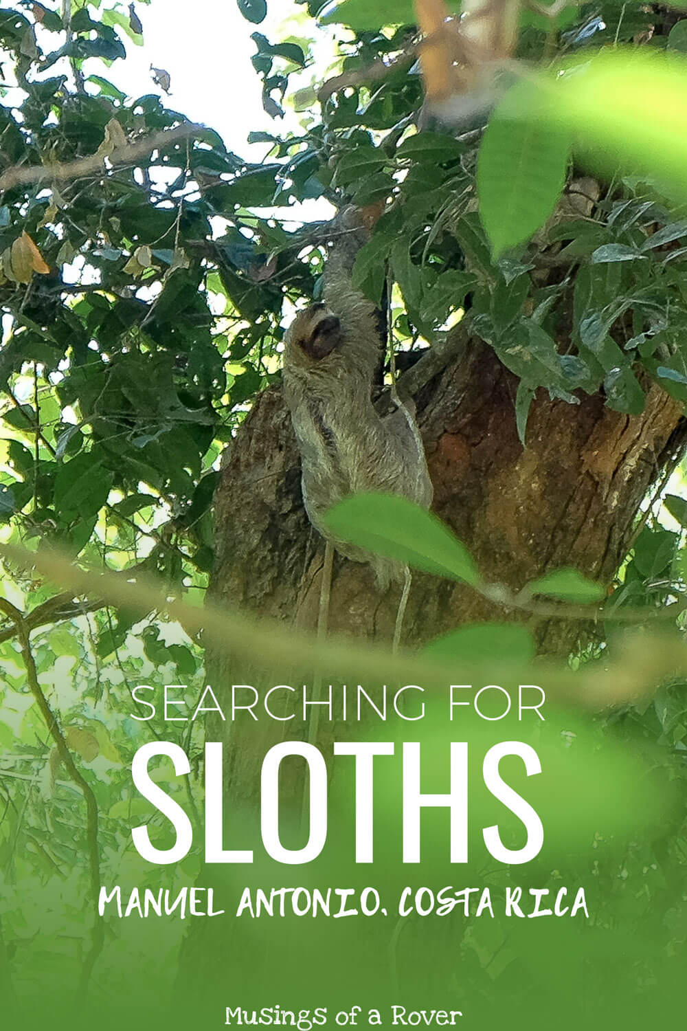 Want to see sloths during your trip to Costa Rica? Considering going to Manuel Antonio National Park if you haven't had any luck. You could see sloths, capuchin monkeys, squirrel monkeys, and more!