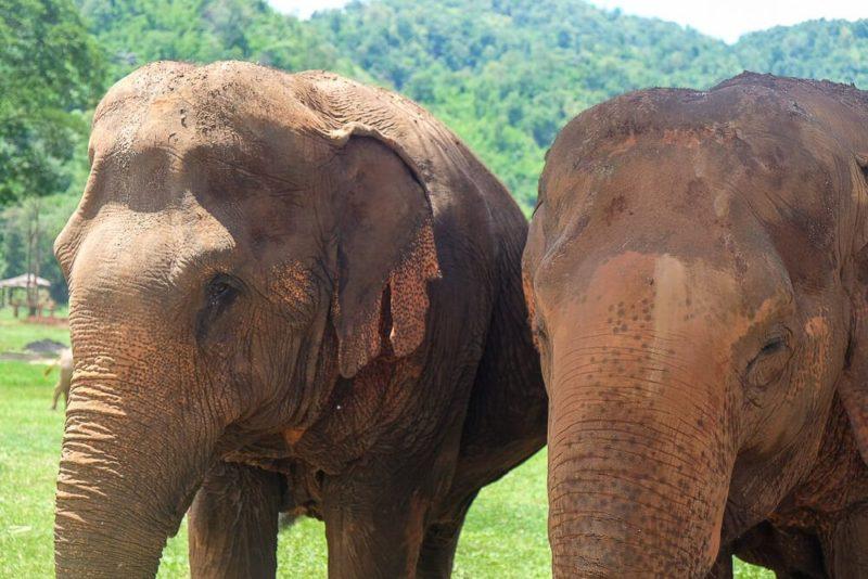Elephant Nature Park Overnight Trip A Review
