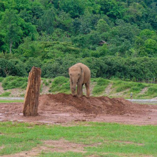Elephant Nature Park Overnight Trip