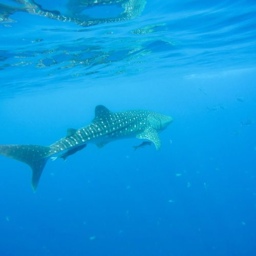 Similan Islands Diving: Why Sea Dragon Is The Best Liveaboard Trip