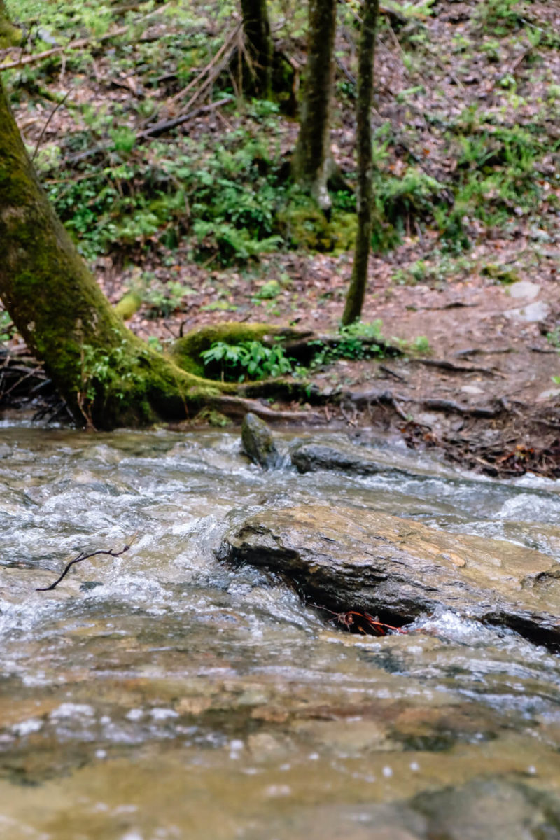 Rich Mountain Loop: Crooked Arm Trail