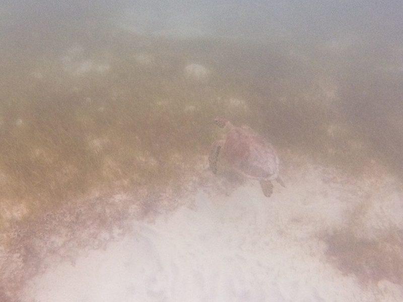 Turtle Bay, Bermuda