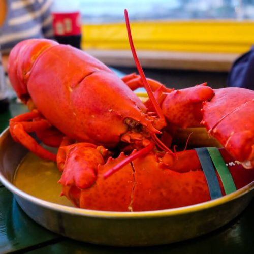 The Best Bar Harbor Lobster Pounds for Your Trip