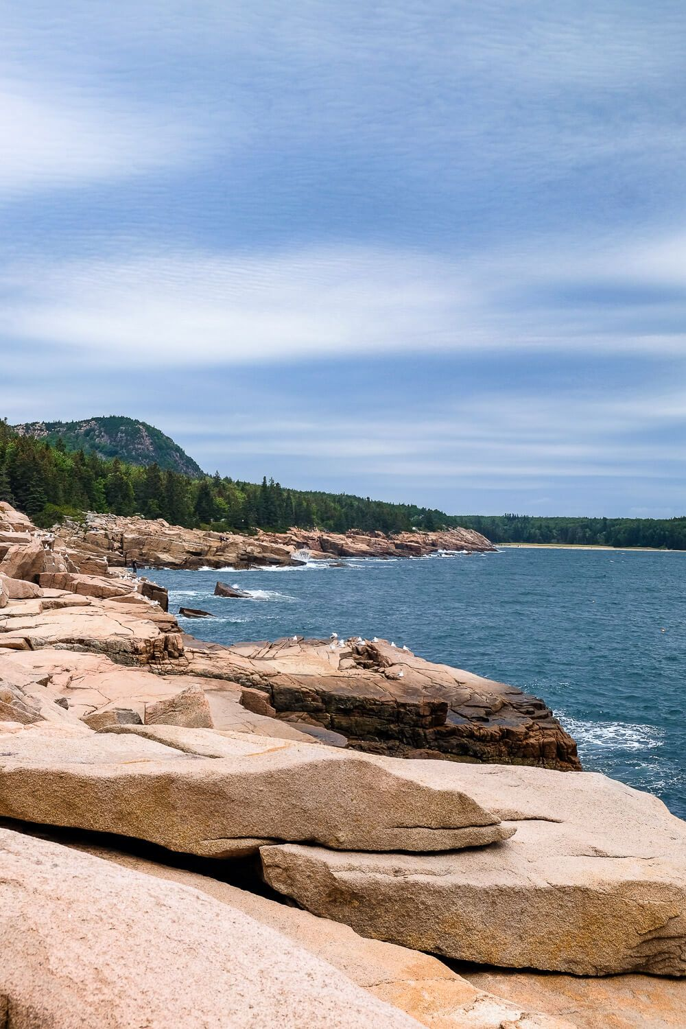 Ocean Path: One day in acadia national park