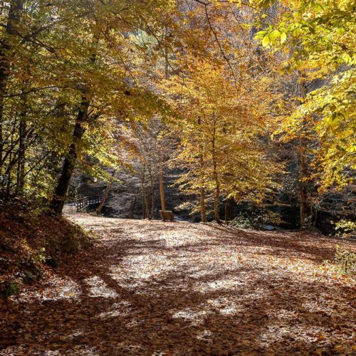 Hike the Deep Creek Trail Loop in the Smoky Mountains