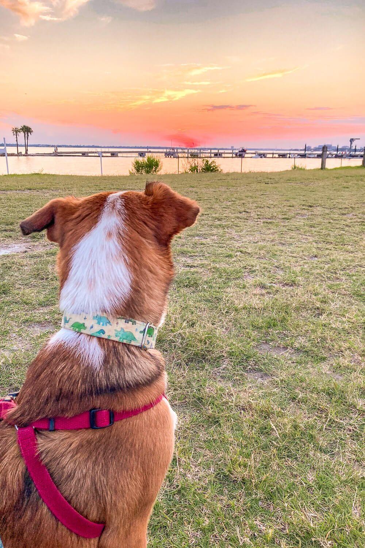 sunrise park dog friendly