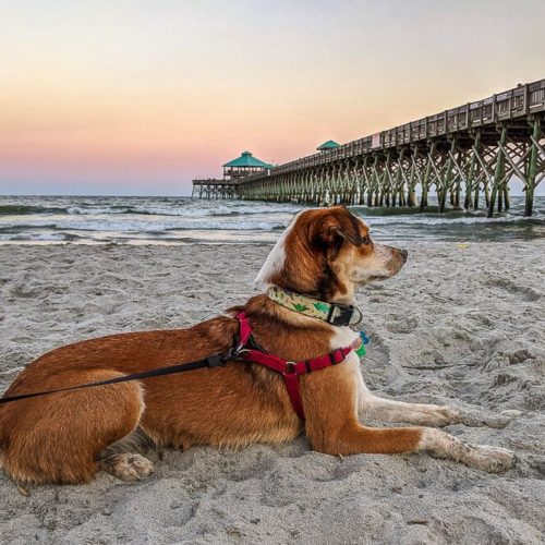 dog friendly folly beach