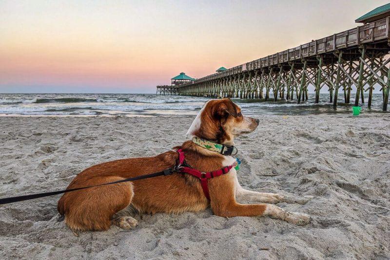 dog friendly folly beach