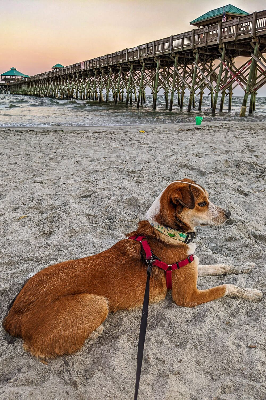 folly beach dog friendly