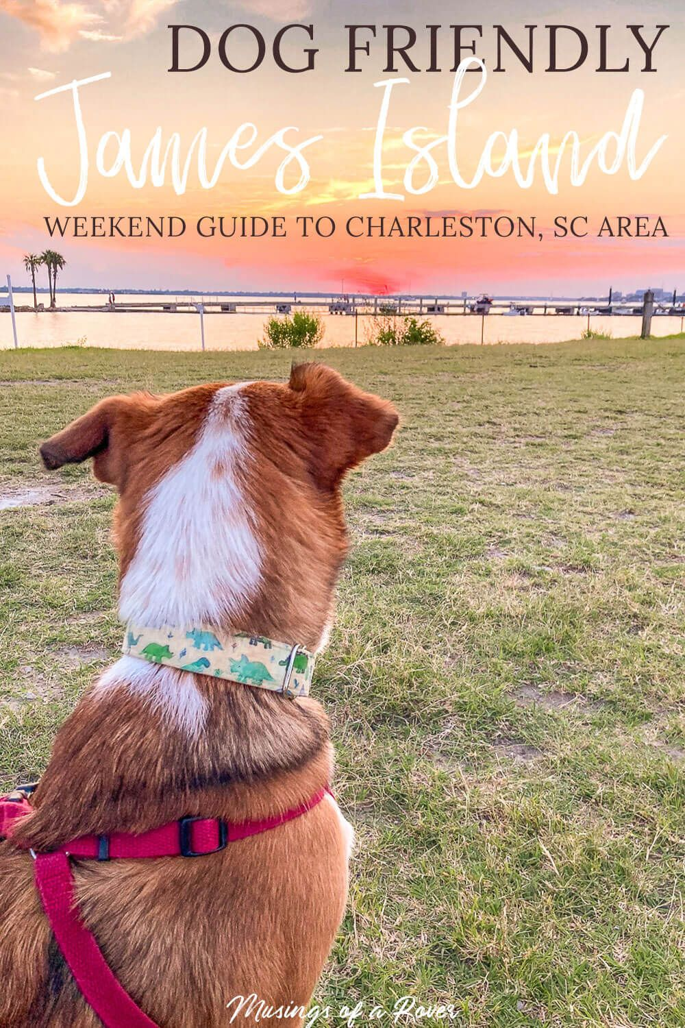 Looking for a dog friendly guide to James Island and the Charleston, SC area? This one includes breweries, restaurants, beaches, parks, and more! Find out where to stay, where to eat, what to do, and where to go!