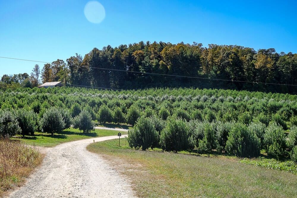 stepps orchard