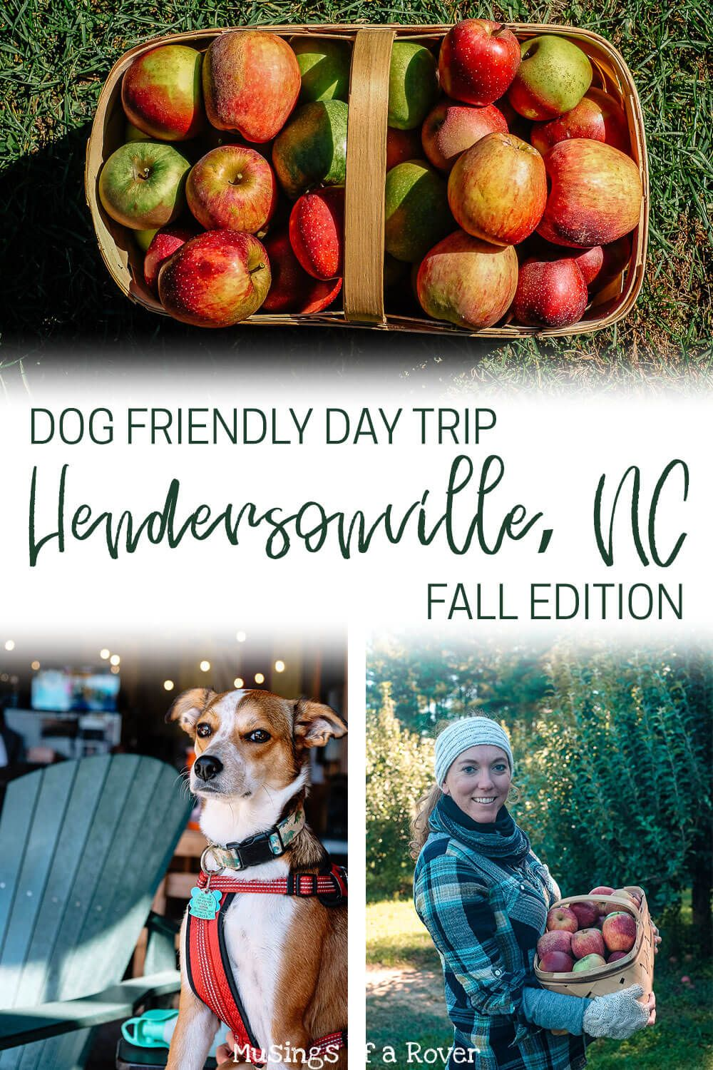 Hendersonville, NC has all of your favorite fall activities. Apple picking, orchards, corn mazes, pumpkin patches, apple doughnuts, breweries, ciders, wineries, and more. Here's how to spend the perfect fall afternoon in Hendersonville.