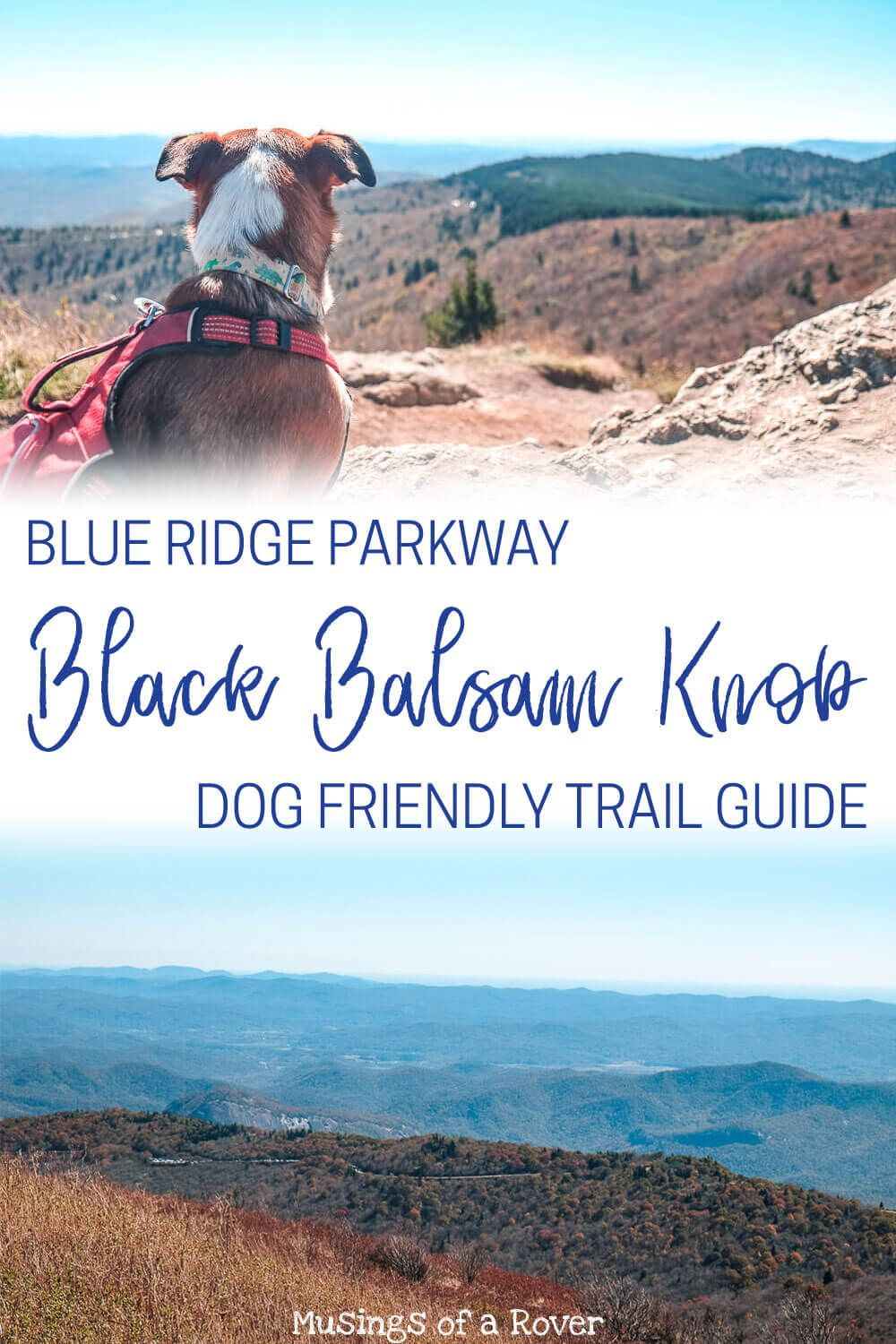 Looking for a day trip from Greenville, SC. One of the best things to do is to head to the Blue Ridge Parkway and hike this easy trail to Black Balsam Knob. And it's dog friendly!