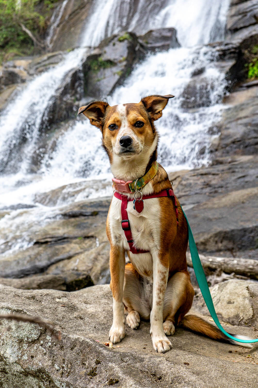dog in front of falls creek waterfall