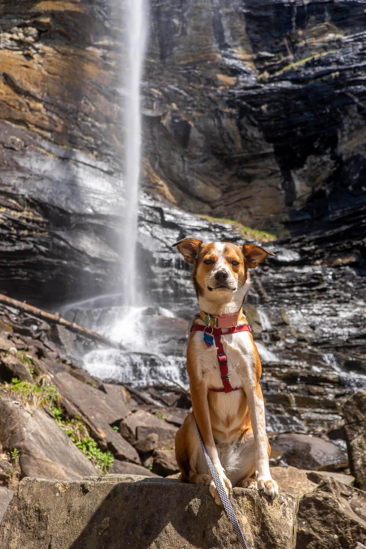 rainbow falls in jones gap state park