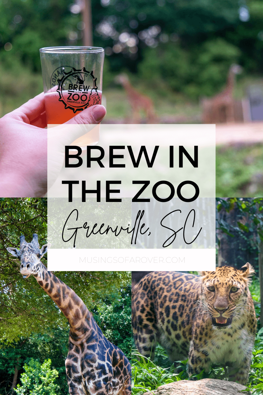 The Greenville Zoo hosts several special events each year and Brew in the Zoo is one of the best if you like craft beer. This adults only after hours event will let you try beer from a dozen or so local breweries while you stroll the zoo. Food is also included and provided by local restaurants.