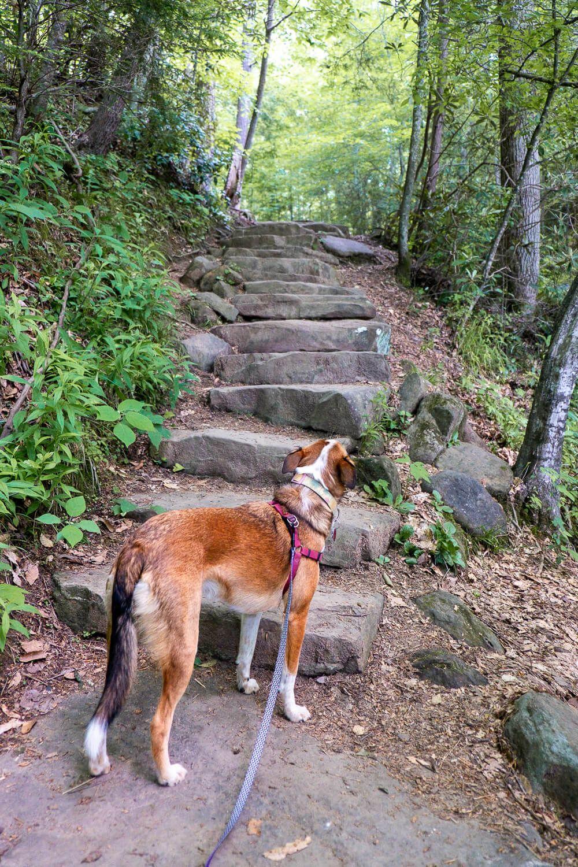wildcat wayside nature trail