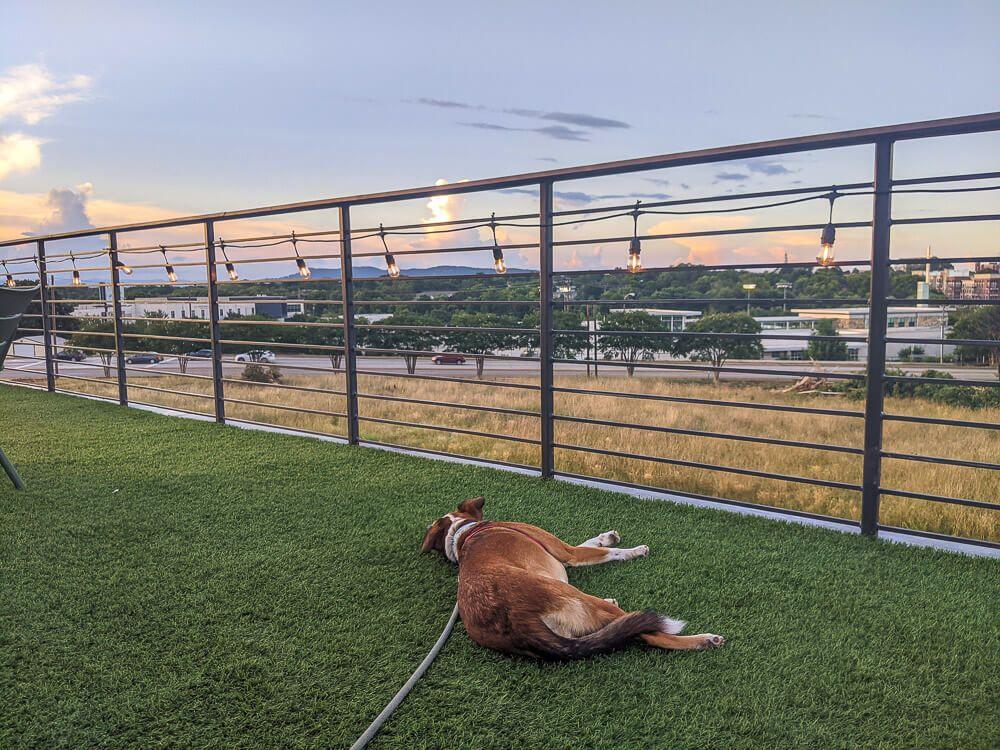 hopping greenville - rooftop bar