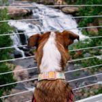 falls park - greenville sc - dog
