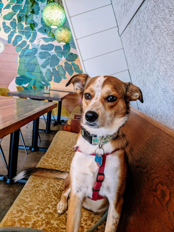 grateful brew - dog